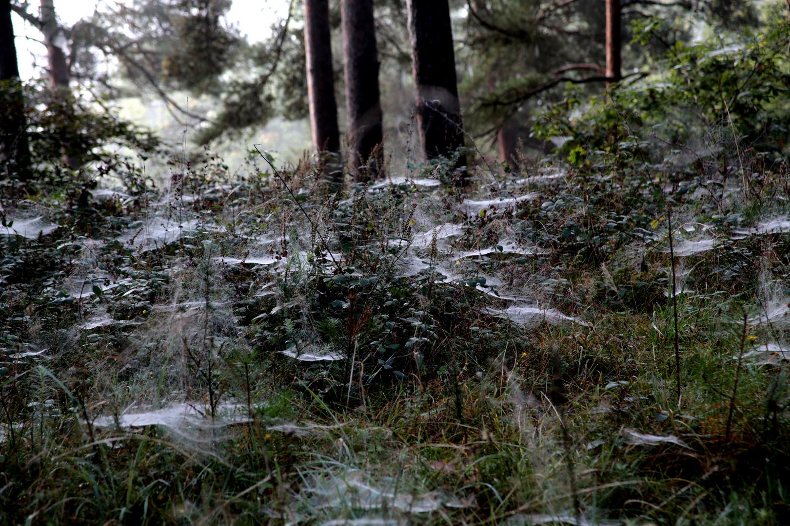 ...spinnenwald...