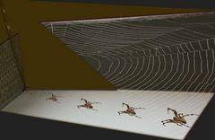 Spinnenwanderung