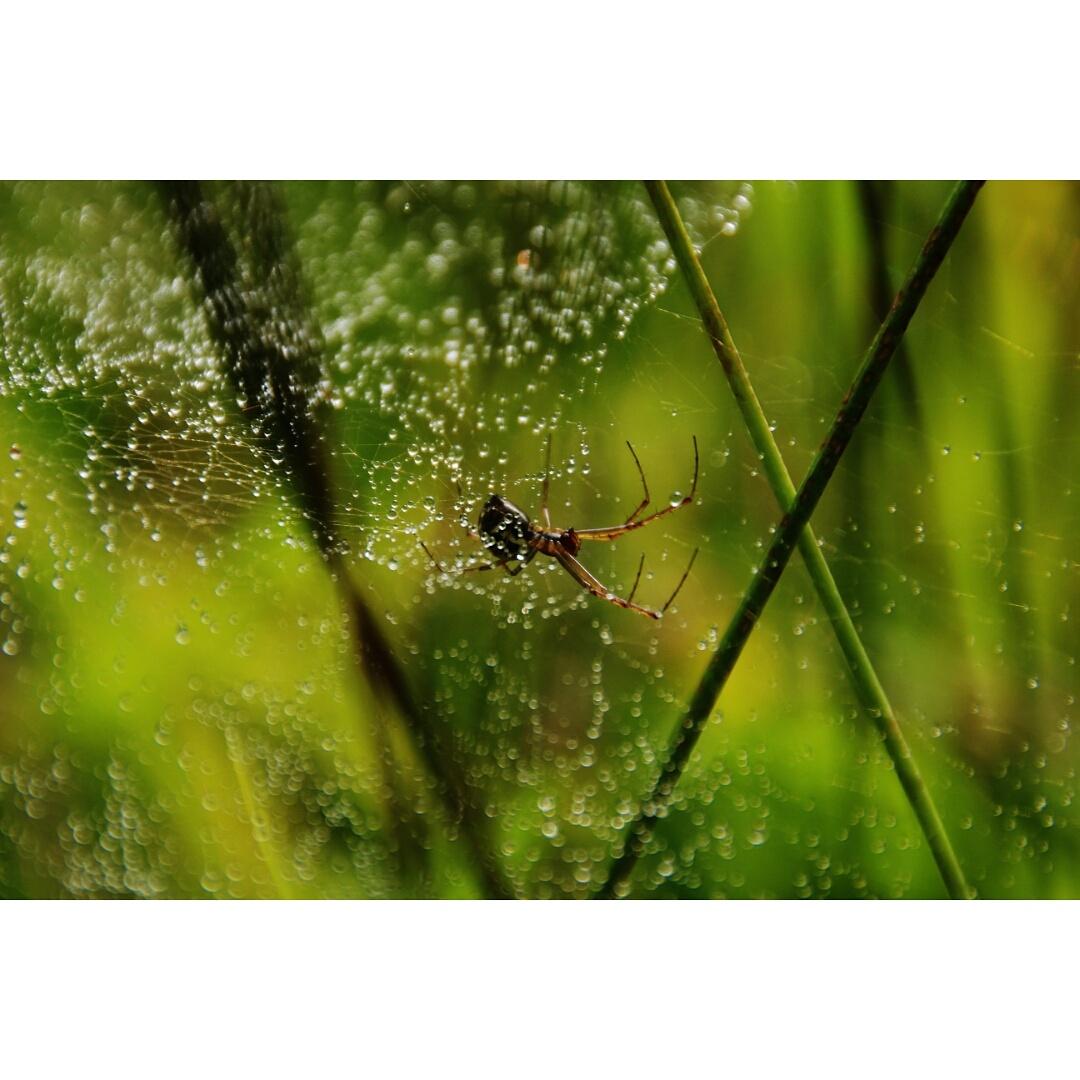 Spinnenweben