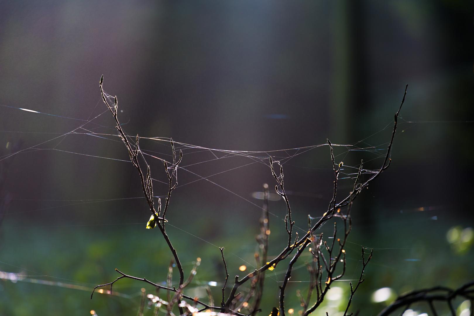 Spinnenweben, brrrrr