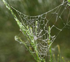 Spinnenwohnung