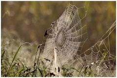 Spinnenzeit