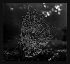 Spinnweben im Morgentau