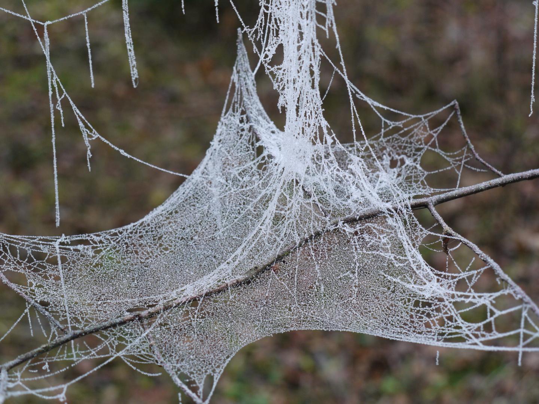 Spinnweben mit gefrorenem Morgentau, 23.11.2011