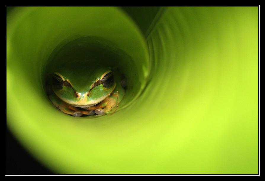 Spirale de grenouille