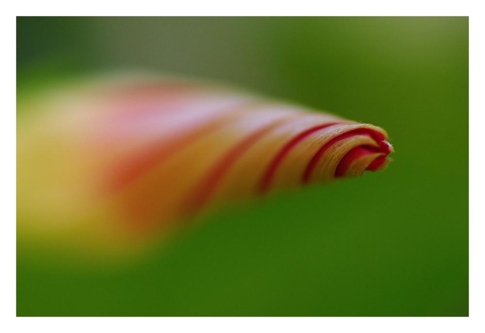 ... spirale naturelle ...