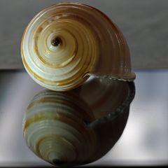 Spiralen / Schneckengehäuse