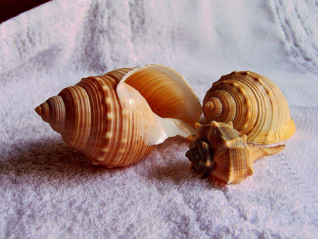 spirali sul morbido