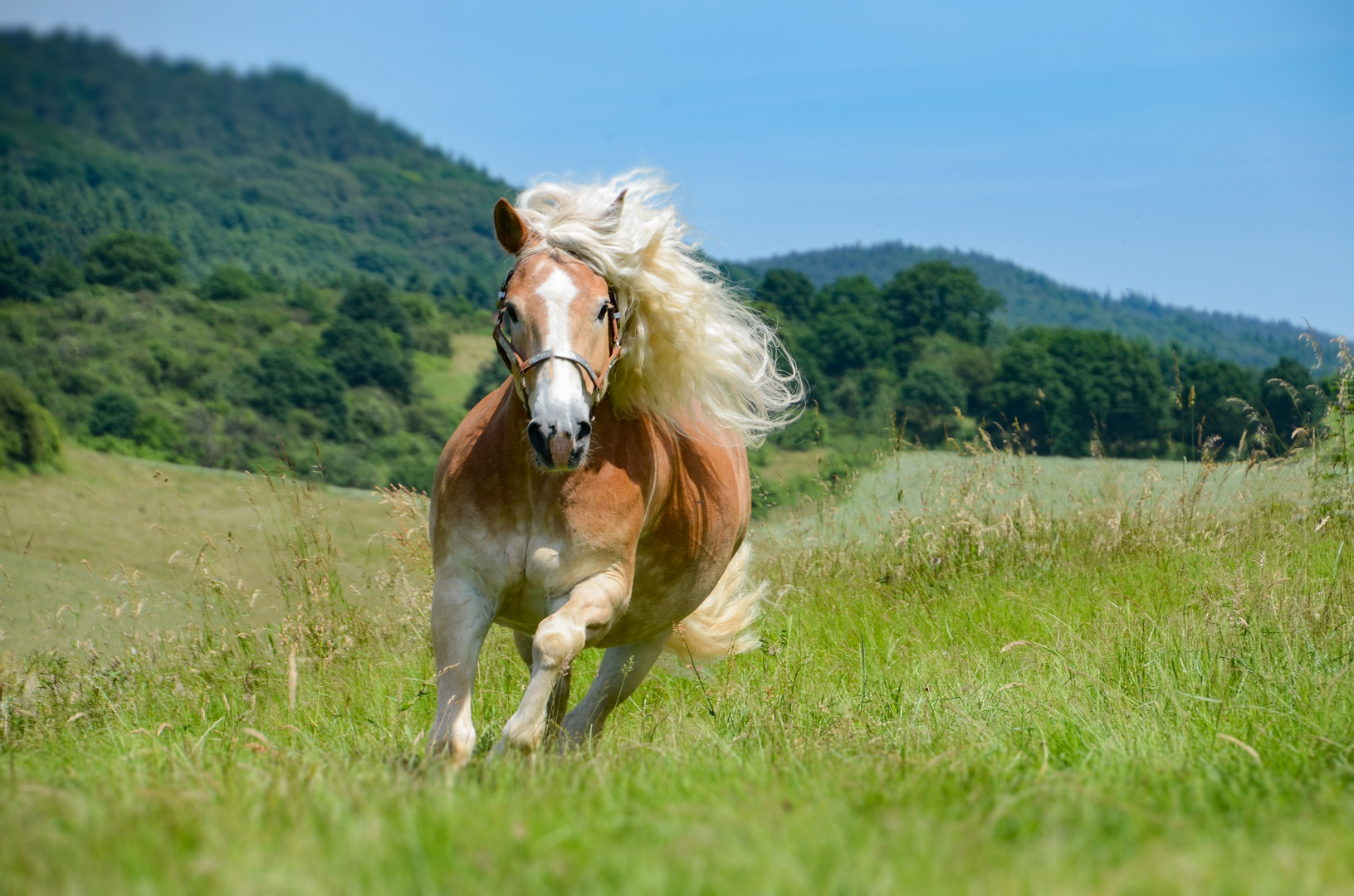 Spirit – Der Wilde Mustang