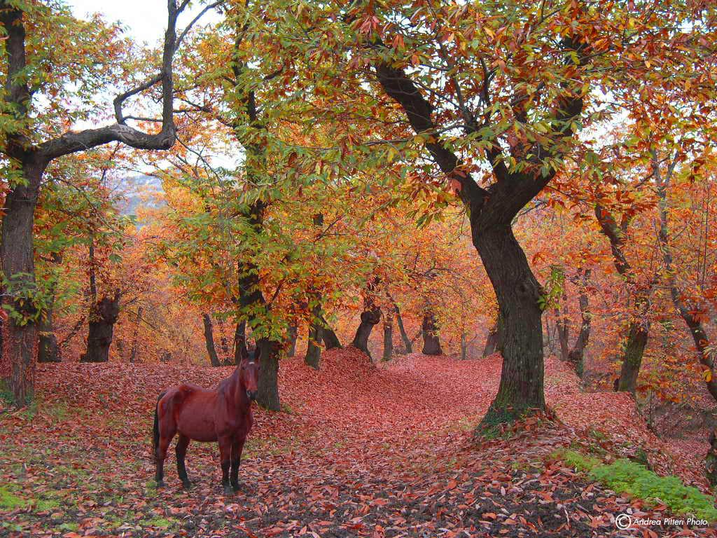 Spirit in Autumn