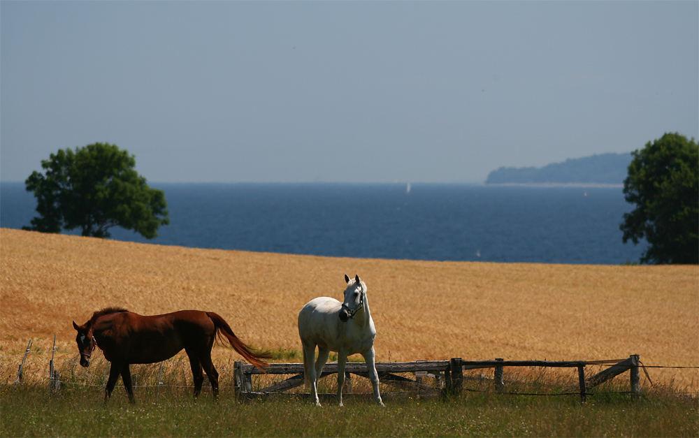 ...Spirit of Holstein...