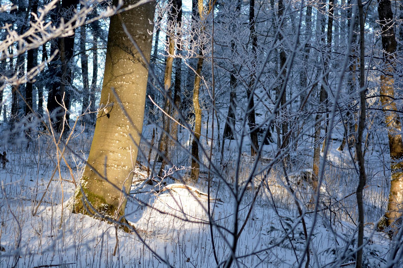 Spitzlicht im Wald