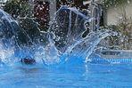 -Splash-
