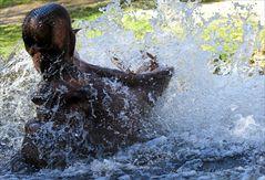 ... Splash ...