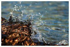 splish splash... Algen waschen...:-)))
