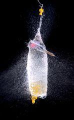 Splish Splash VOL 3