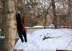Sportlicher Panda