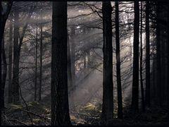 Spot an im Unterholz