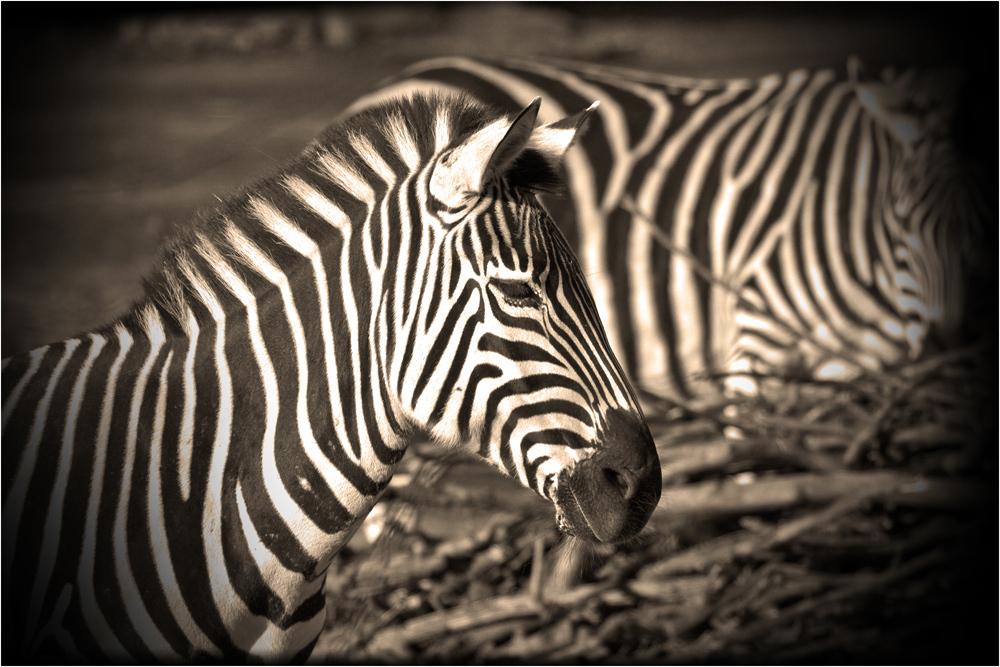 Spot for stripes...