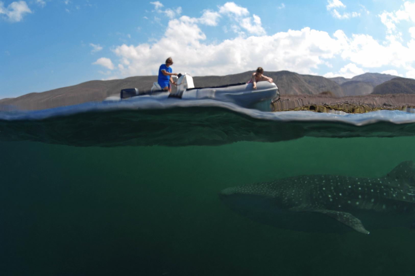 Spotting Whaleshark