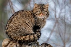 SPOTTING WILDCAT AT TOWER OF OBSERVATION