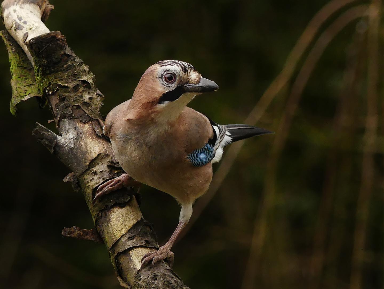 Sprachbegabt Foto Bild Natur Tiere Wildlife Bilder Auf