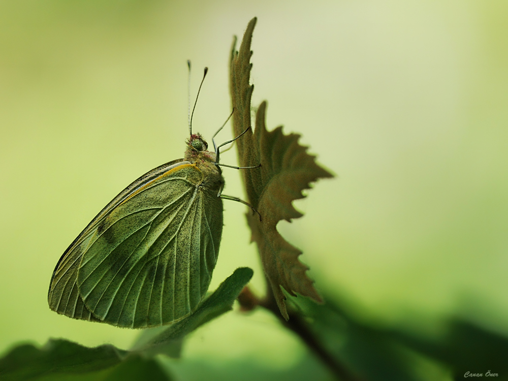 Spread Your Wings and Fly Butterfly....