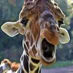 Sprechende Giraffe Zoo Duisburg