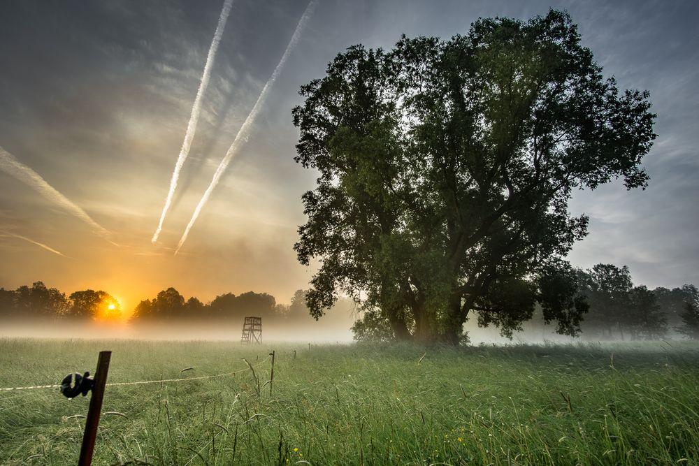 Spreewald-Baum