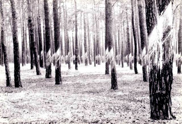 Spreewald im Winter 93