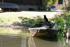 Spreewaldkatze