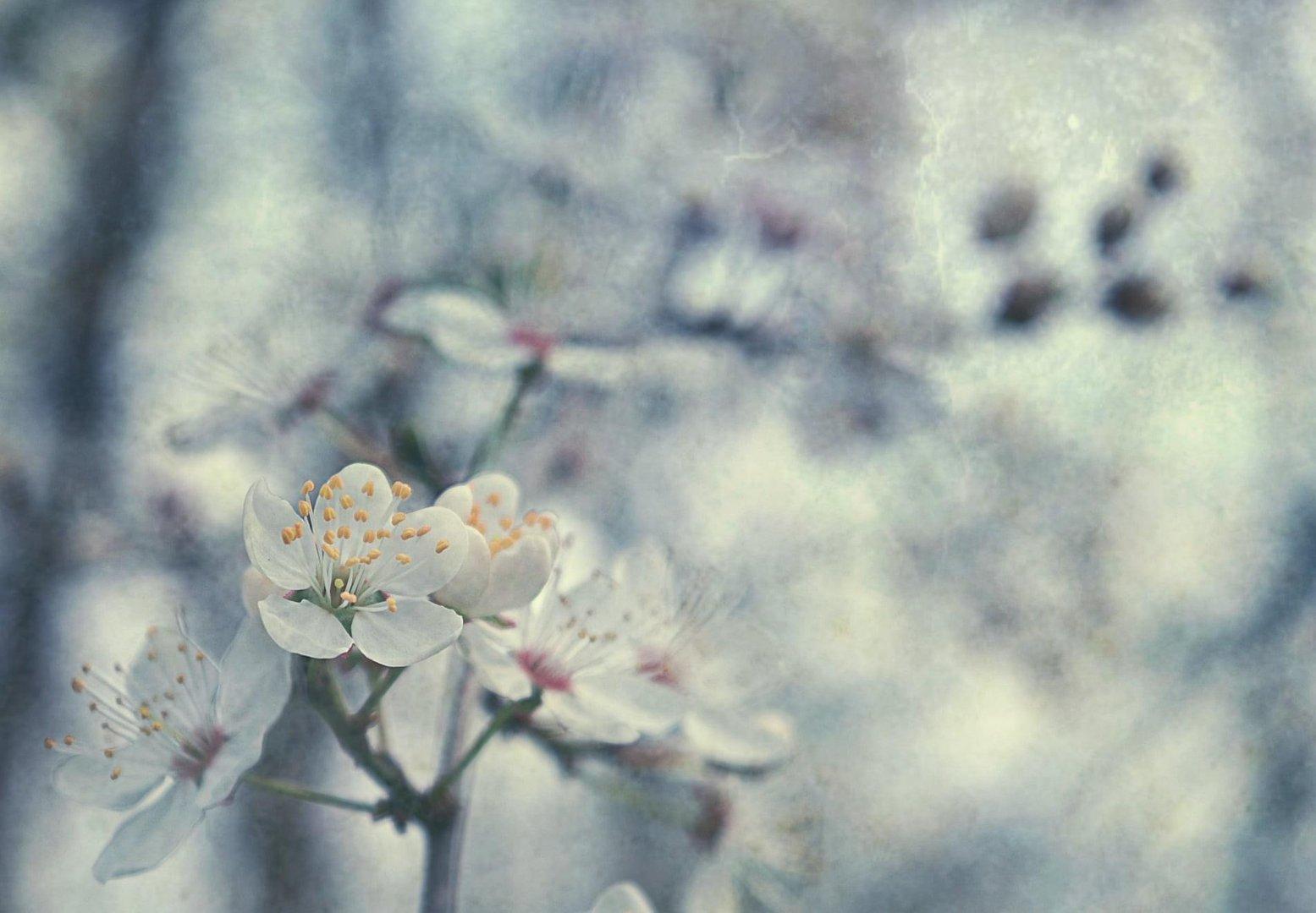 Spring affair - 1
