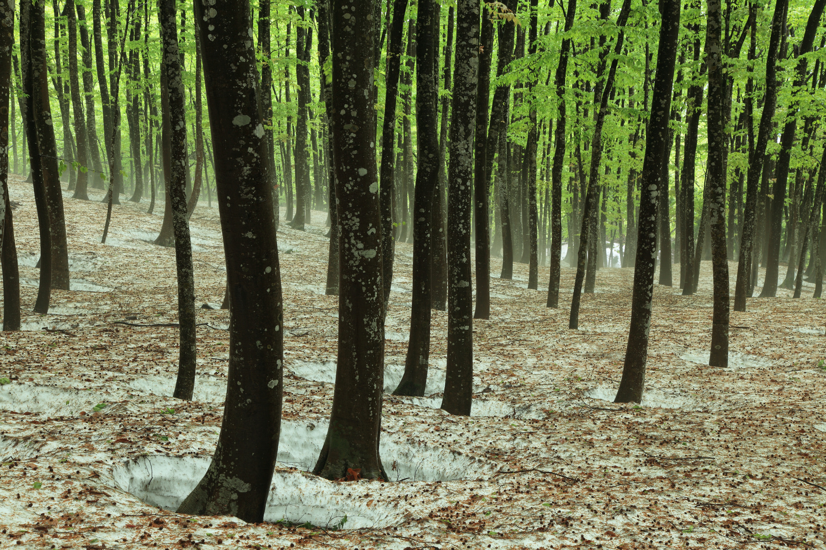 Spring Arrival in Winter Forest