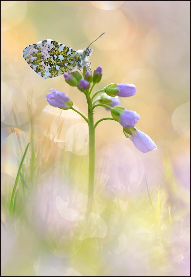[ Spring awakening ]