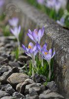 spring begins to bloom