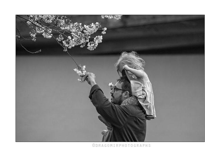 Spring Blossom One 3
