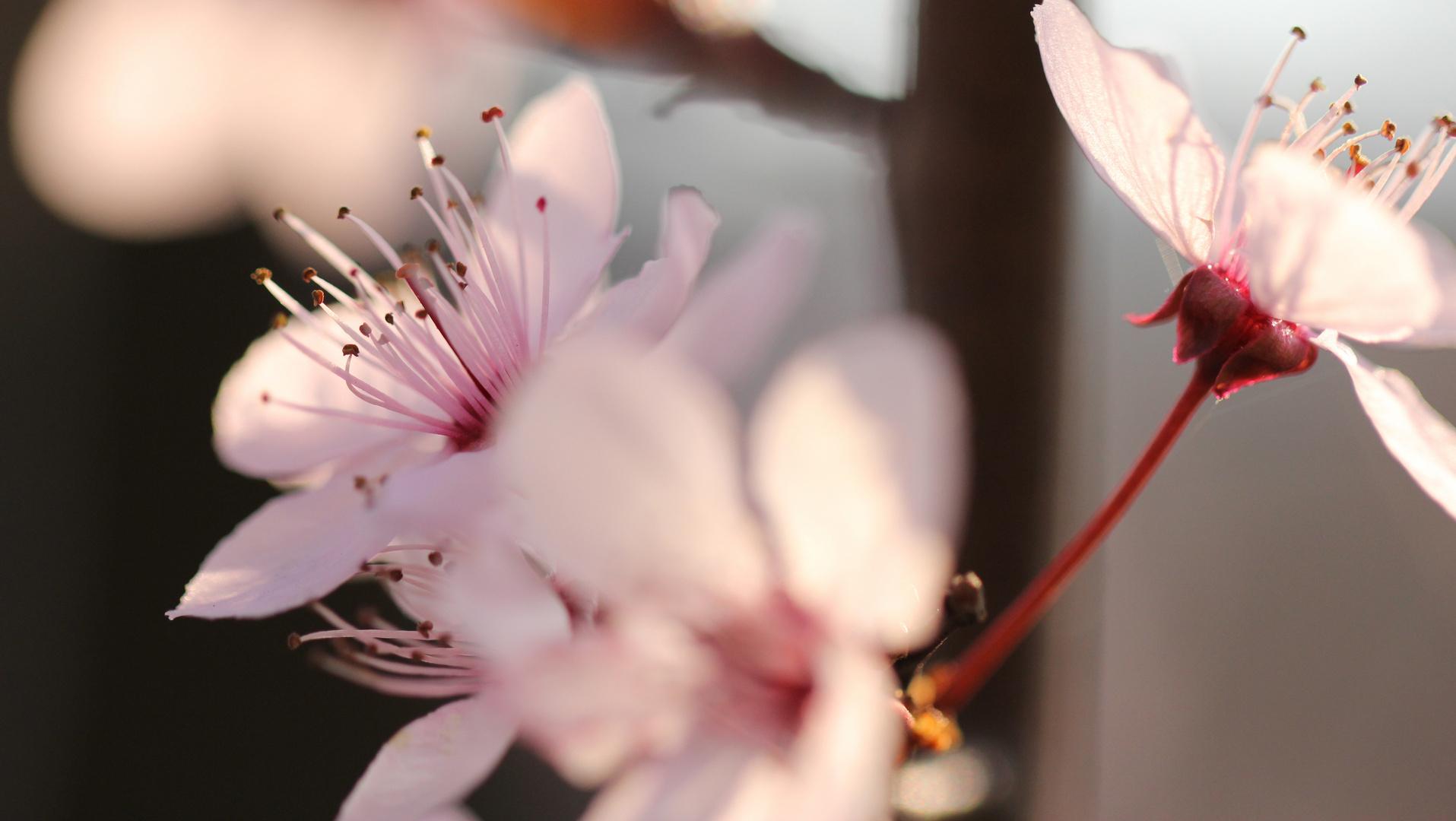 Spring blossoms in Gummersbach