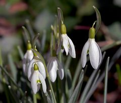 Spring Close - up