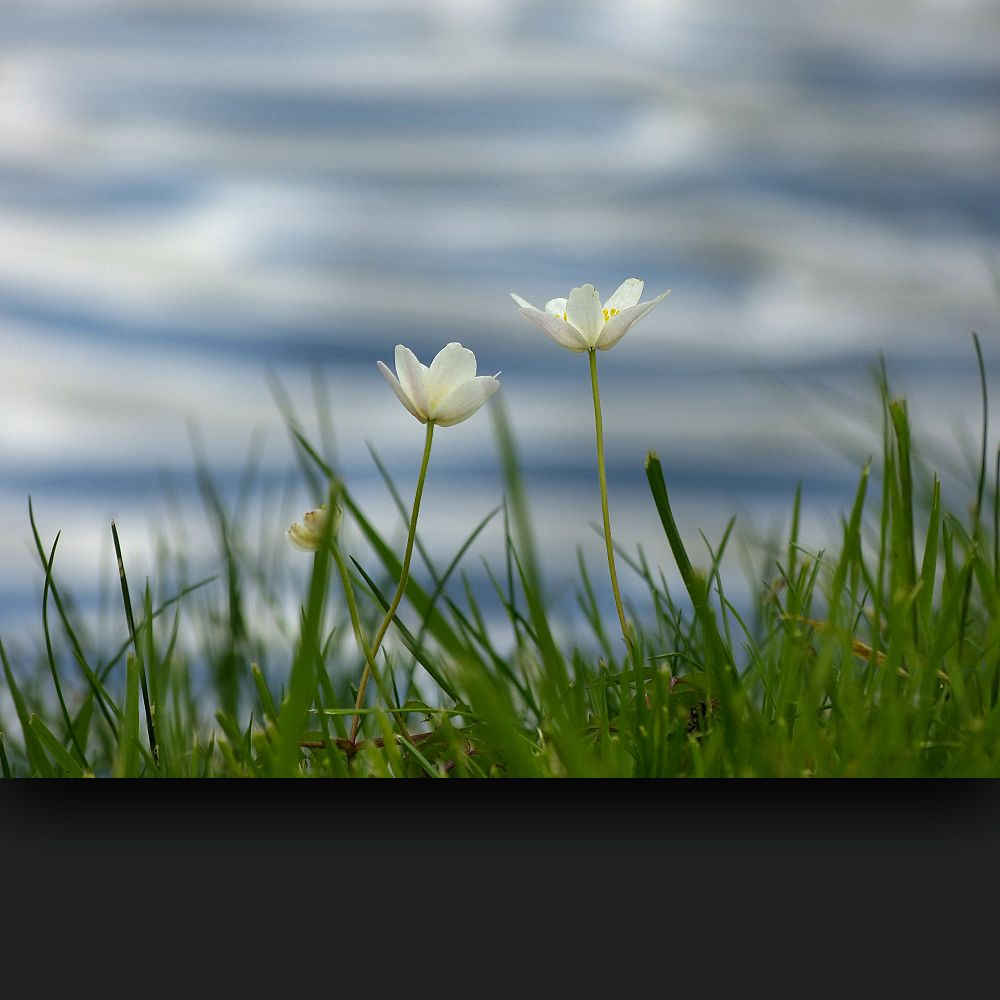 Spring flowers on a background of water