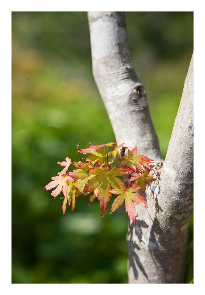 Spring foliage-2