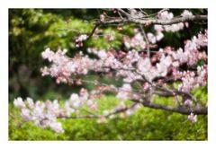 Spring has come-1