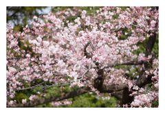Spring has come-2
