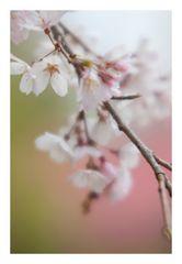 Spring has come-3