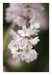 Spring has come-6