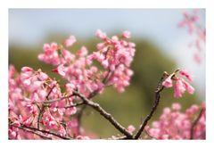 Spring has come-7