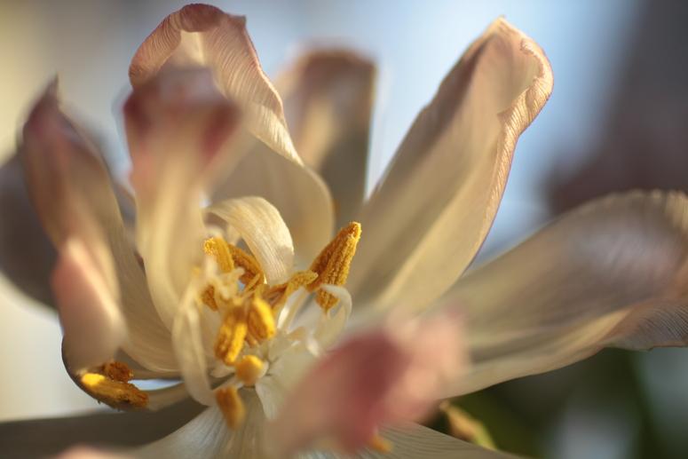 spring (III)