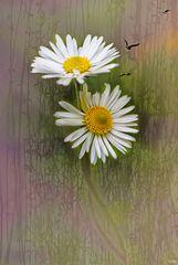 Spring Impressions...