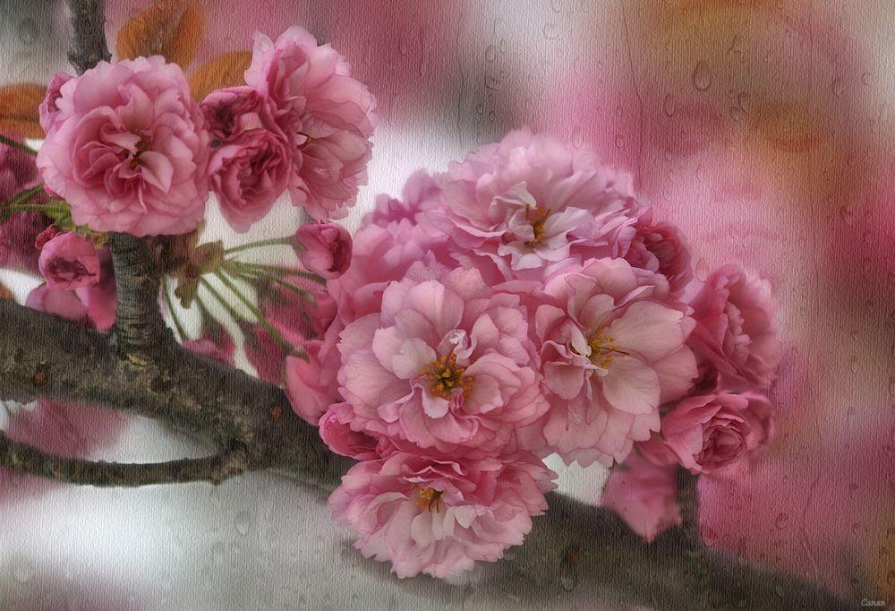 Spring Impressions.II