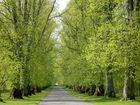 Spring in Blair Atholl