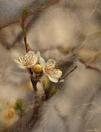 Spring In My Soul...